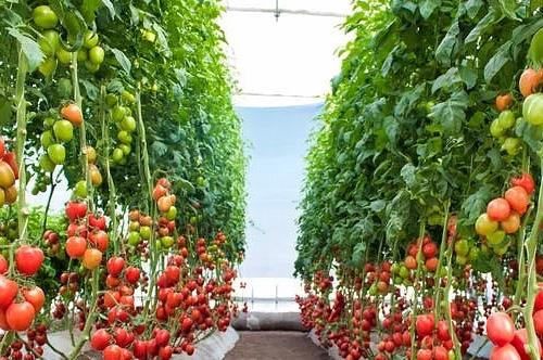 农业营销策划