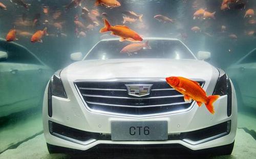 凯迪拉克鱼水艺术营销