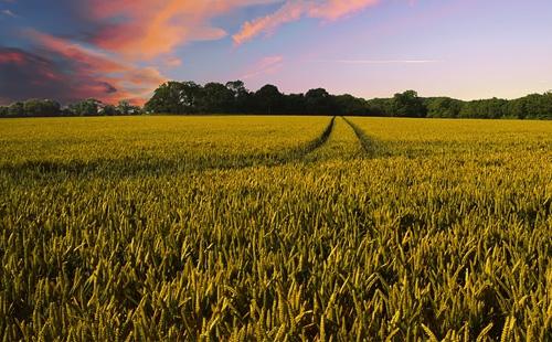 生态农业如何规划未来的发展方向